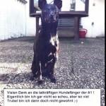 """Hund sorgte für Stau auf A 1: """"Betty"""" bedankt sich für Rettung"""