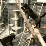 Mitarbeiter erkrankt: Tierheim bleibt länger geschlossen