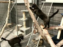 Personeller Engpass: Tierheim in dieser Woche geschlossen