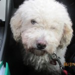 """Barny"" büxt im Autobahnkreuz aus: Polizei als Hundefänger"