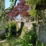 Mauerblümchen am Haus Opherdicke sind wahre Überlebenskünstler