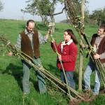 Kostenloses Pflanzgut für Streuobstwiesen vom Kreis Unna
