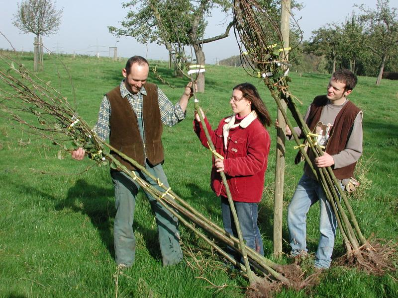 Der Kreis Unna gibt auf Antrag kostenloses Pflanzgut und sogar Bäume für Streuobstwiesen ab.  (Foto: Kreis Unna)