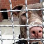 Kreis-Tierheim diese Woche geschlossen
