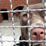 Personeller Engpass: Tierheim vorläufig geschlossen