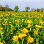 Feldraine und Wegeränder: Erhaltung der Artenvielfalt wichtig