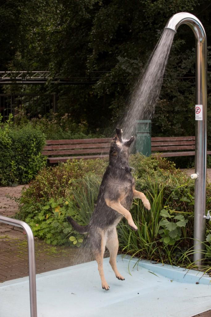 Vor dem Baden wurde sogar vorshriftsmäßig geduscht: Hundeschwimmen in der Schönen Flöte. (Foto: Peter Gräber)