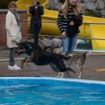 Hundeschwimmen beschließt Badesaison in der Schönen Flöte