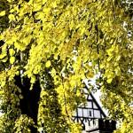 Farbenprächtiges Holzwickede im goldenen Oktober