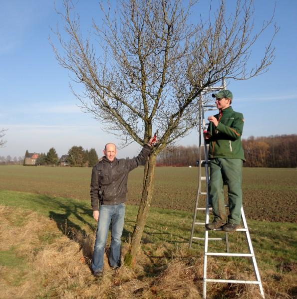 : Hartmut A. Kemper (links) vom Kreis Unna zeigt Landschaftsgärtner Sebastian Schlierkamp den richtigen Schnitt. Foto: T. Hallmann – Rechte Kreis Unna