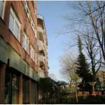 Kirchstraße 3 bis 5: Umweltausschuss lehnt Fällung der Platanen ab