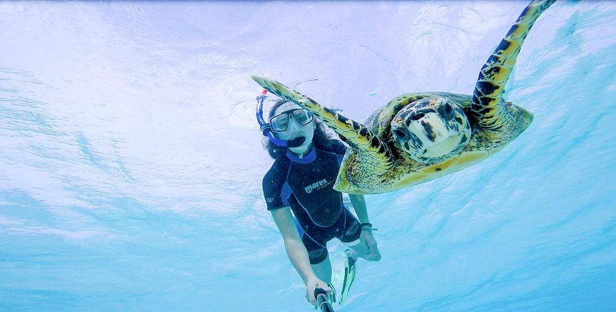 Für Mara das absolute Highlight: TAuchen mit einer Schildkröte auf den Malediven. (Foto: Urlauibsgurus - Mara Molitor)