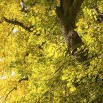 Freies Sägen für freie Bürger: CDU will Baumschutz abschaffen