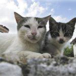 Katzenelend erschreckend: Grüne fordern Kastrationspflicht