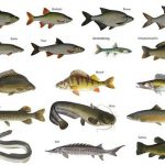 Rechtzeitig anmelden zur Fischereiprüfung Herbst 2018