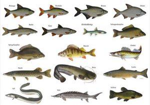 Fischereiprüfung 2019: 165 neue Petrijünger im Kreis Unna
