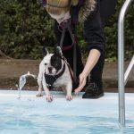 Badespaß für Hunde im Freibad Schöne Flöte