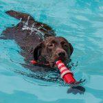 Wasserspaß für Hunde zum Ausklang der Freibad-Saison