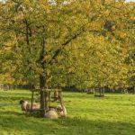 Einsatz für die Umwelt: Ehrenamtliche Naturschutzbeauftragte gesucht
