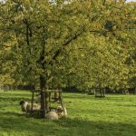 Kreis Unna gibt kostenlos Pflanzgut für Streuobstwiesen ab