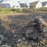 Umweltpolitiker wollen Baumschutz für Privateigentümer abschaffen