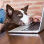Nimm-Deinen-Hund-mit-zur-Arbeit-Tag: Mehr Motivation und Konzentration bei der Arbeit