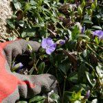 """Serie """"Zurück zur Natur"""": Der Hausgarten - Gepflegtes Durcheinander"""