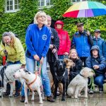 Freilauffläche für Hunde: Unterschriftenaktion erfolgreich