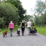 """Serie """"Zurück zur Natur"""": Hunde in der freien Landschaft"""