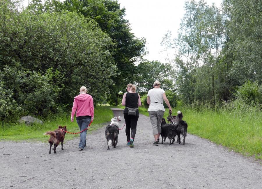 So ist es vorbildlich und korrekt: Hunde an der Leine am Standortübungsplatz in Hengsen (Holzwickede). (Foto: Birgit Kalle – Kreis Unna)