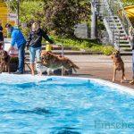 Schwimmspaß für Hunde in der Schönen Flöte