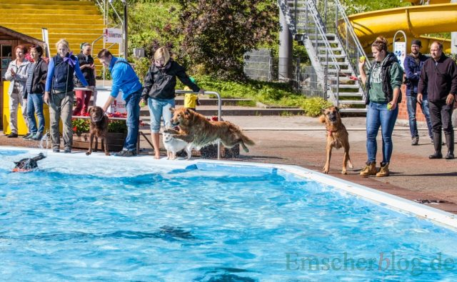 Nach dem offiziellen Ende der Freibadsaison kommt sich an diesem Wochenende die Vierbeiner zum großen Schwimmspaß im Holzwickeder Freibad.