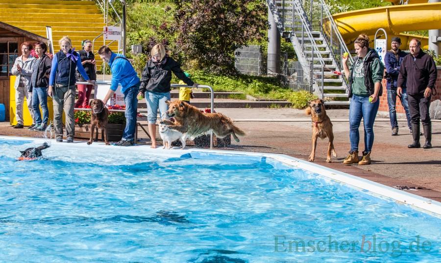Nach dem offiziellen Ende der Freibadsaison treffen sich an diesem Wochenende die Vierbeiner zum großen Schwimmspaß im Holzwickeder Freibad. (Foto: P. Gräber - Emscherblog.de)