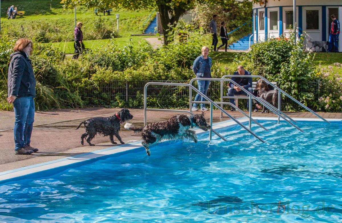 Das Freibad Schöne Flöte hat an diesem Wochenende zum Schwimmspaß für Hunde eingeladen.(Foto: P. Gräber - Emscherblog.de)