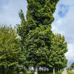 Umweltausschuss will Baumschutz abschaffen: Freies Sägen für freie Bürger