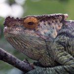 """Serie """"Zurück zur Natur"""": Exotischer Haustiere mit großer Fangemeinde im Kreis"""