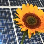 Wohnpark Emscherquelle: Bei ökologischer Ausrichtung wollen auch Grüne mitarbeiten
