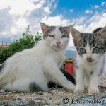 Freilebende Katzen: Katzenschutzverordnung beschlossen