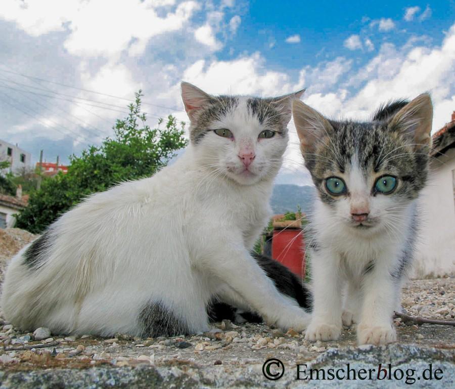 Der Kreistag hat eine Katzenschutzverordnung beschlossen. Auch die Besitzer von Freigängerkatzen sind davon betroffen. (Foto: P. Gräber - Emscherblog.de)