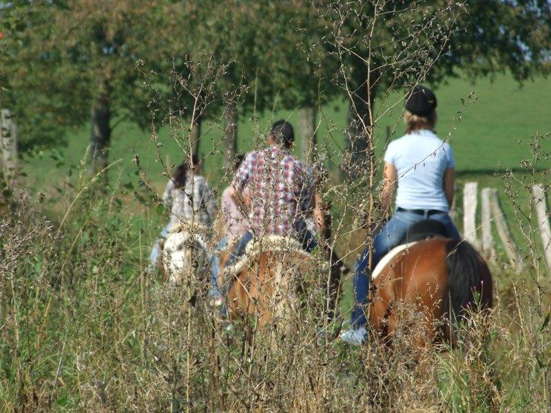 Reiten, Reitwege, Pferde