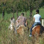 Neuregelungen zum Reiten im Wald: Netz wird in Schwerte erweitert