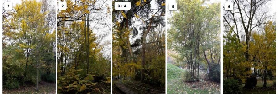 Diese Bäume im Emscherpark sollen dem Mehrgenerationenspielplatz weichen und gefällt werden. (Foto: Gemeinde Holzwickede)