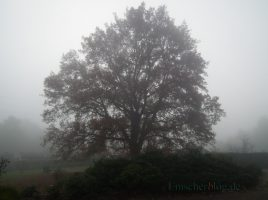 In der freien Landschaft ist das Trimmen oder gar Fällen von Bäumen weiterhin nicht erlaubt. Darauf macht der Kreis Unna aufmerksam. (Foto: P. Gräber - Emscherblog.de)
