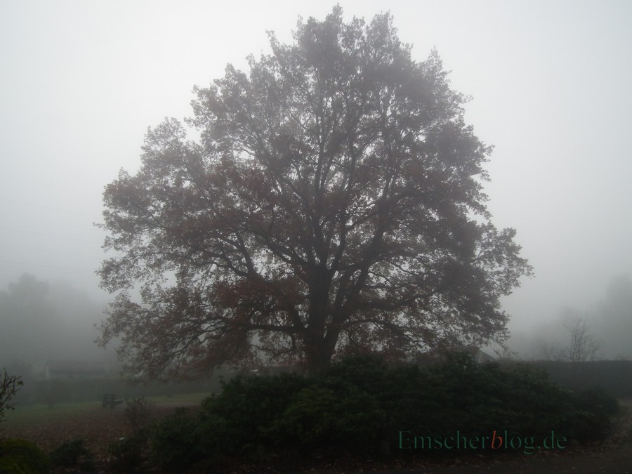 Welche Bäume Darf Man Nicht Fällen : kreis weist auf baumschutz hin baum und busch sind oft gesch tzt emscherblog nachrichten ~ A.2002-acura-tl-radio.info Haus und Dekorationen