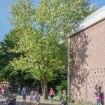 Umweltausschuss genehmigt Fällen von 15 gemeindeigenen Bäumen