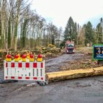 Holzarbeiten haben begonnen: Steinbruchstraße weiterhin gesperrt
