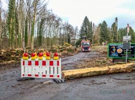 Die Räumung der umgestürzten und nicht mehr standfesten Bäume an der Steinbruchstraße hat begonnen. In Höhe des Parkplatzes Schöne Flöte ist die Straße jedoch weiterhin gesperrt. (Foto: P. Gräber - Emscherblog.de)