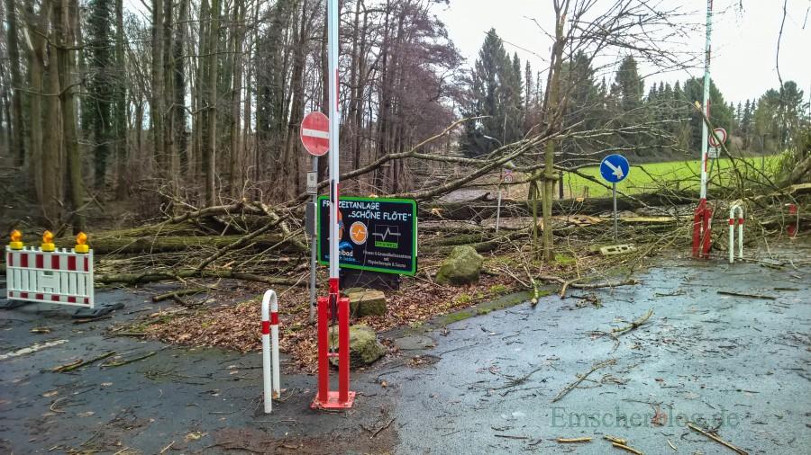 Gleich mehrere Bäume hat Sturmtief Friederike hier geknickt: Die Steinbruchstraße bleibt vorläufig gesperrt. Die ZTufahrt zum Parkplatz Schöne Flöte ist von dem Billmericher Weg aus frei. (Foto: P. Gräber - Emscherblog.de)