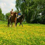 Kreis erinnert: Pferde brauchen neue Reitkennzeichen