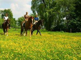 Pferde, Reiten Reitwege